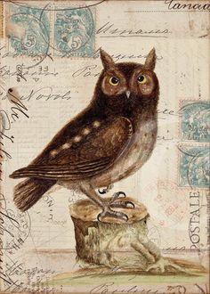 Printable Owl - Rosana Raven Pinned by www.myowlbarn.com