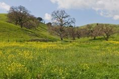 Green hills  wildflowers along Pacheco Pass, Hollister, California Stock Photo