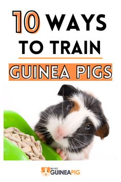 Pig Facts, Pet Guinea Pigs, Emotional Support Animal, How To Train Your, Pet Names, Darwin, Simple Way, Puppy Love, Ale