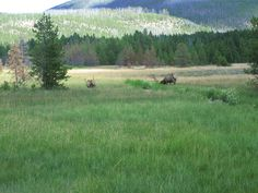 Mountain_meadow_at_Yellowstone_National_Park_Picture_1196.jpg (2592×1944)