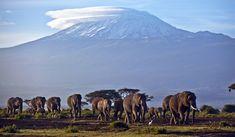 Monte Kilimanjaro, Tanzania Uno de los lugares míticos de África. La montaña, de la que escribió Ernest Hemingway, está situada en el noreste de Tanzania. Formada por tres volcanes inactivos, es el punto más elevado del continente. Además, el Kilimanjaro es conocido por sus famosos campos de hielo en la cumbre que se están reduciendo de forma drástica desde principios del siglo XX y lo convierten en uno de esos paisajes que ya nunca volveremos a ver igual.