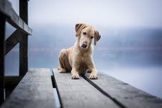 Hunter - http://www.facebook.com/dogpicture