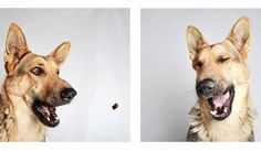 <p>Photographer, Guinnevere Shuster, started photographing the Humane Society of Utah's adoptable dogs in photo booth style about six months ago. </p>