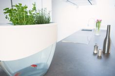 Vegua: Self-Cleaning Aquaponics System to Grow Organic Food by Johan Manders - Sphereness — Kickstarter