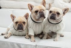 These cute pooches are ready for sweater weather! Are you?