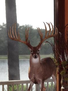 Here's a place to hang your coats! Whitetail Deer Pictures, Deer Photos, Deer Pics, Zoo 2, Big Whitetail Bucks, Big Deer, Deer Mounts, Deer Camp, Deer Family