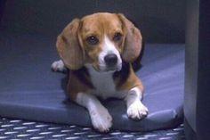 Enterprise: Porthos, Captain Archer's Beagle