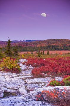 Moonrise at Dolly Sods Wilderness, West Virginia; photo by .vtgohokies