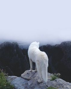 arctic fox on top of a rock. how nice . :)