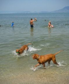 Cippo enjoying summer