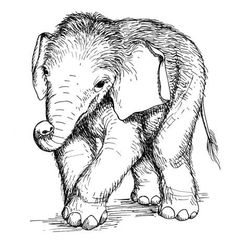 Zoo Coloring Pages For Preschoolers | Zoo Animals Coloring Picture ...