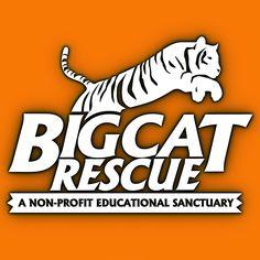 Big Cat Rescue logo. Big Cat Rescue, Tampa, Florida