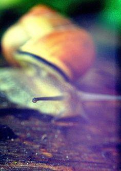 "Title: ""Curiosity"". Snail in my garden"
