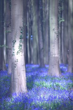 .Tress with great lighting effects.