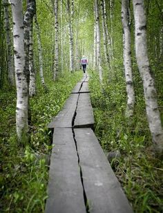 I can't help but think of walking through the forest to get to the pond at the summer camp I attended for several years; the path through the forest also had planks over it, although that was more about uneven ground and mud than anything else.