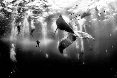 Les gagnants du concours National Geographic 2015