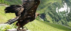 Falknerei Galina - Malbun Alpine Coaster, Interactive Museum, Ropes Course, Family Activities, Bald Eagle, Switzerland, Parks, Animals, Road Trip Destinations