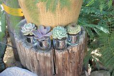 Our specialty line succulents w/ mercury type glass pots. Succulent Wedding Favors, Planting Succulents, Mercury, Pots, Type, Glass, Creative, Beautiful, Drinkware