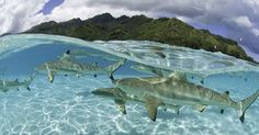 Love & Respect the Ocean. Maui Real Estate Guru #OceanDefender http://www.huffingtonpost.com/2014/06/08/reasons-to-love-the-ocean_n_5456678.html?ir=Hawaii