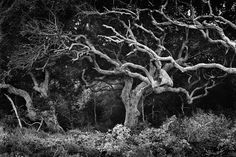Clyde Butcher - Black and White Fine Art Photographer    Uses a large format camera to capture the beauty of Florida