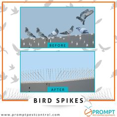 8 Best Bird Spikes images in 2017 | Cnd nails, Riveting, Spikes