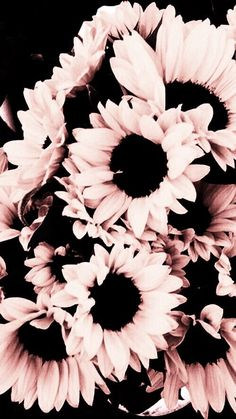 Love these pink sunflowers, beautiful! Love these pink sunflowers, beautiful! Black Wallpaper Iphone, Trendy Wallpaper, Aesthetic Iphone Wallpaper, Aesthetic Wallpapers, Pink And Black Wallpaper, Wallpaper Desktop, Disney Wallpaper, Cute Wallpaper Backgrounds, Tumblr Wallpaper