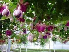 Vertical Gardening: 9 Great Vines & Hanging Plants