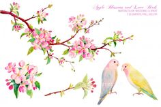 Watercolor Clipart Apple Blossom Love Birds By Cornercroft