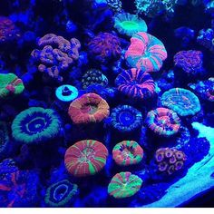 Saltwater Aquarium - Find incredible deals on Saltwater Aquarium and Saltwater Aquarium accessories. Let us show you how to save money on Saltwater Aquarium NOW! Coral Reef Aquarium, Saltwater Aquarium Fish, Saltwater Tank, Marine Aquarium, Underwater Creatures, Ocean Creatures, Underwater World, Marine Fish Tanks, Coral Art