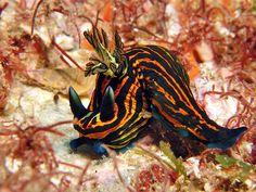 Sea Slug, Stuffed Animal Patterns, Whales, Marine Life, Sea Creatures, Under The Sea, Turtles, Dolphins, Biology