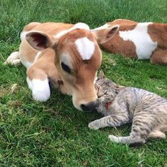 Cat gives grass puppy some licks