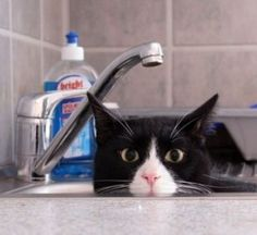 Anyone seen the cat?