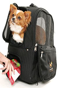 I love this backpack with wheels pet carrier for the cats! There are zippered pouches for food, supplies, etc. great to have in an emergency or for the vet Pet Rats, Pets, Pet Transport, Pig Ideas, Airline Pet Carrier, Backpack With Wheels, Cat Harness, Emergency Kits, Cat Carrier