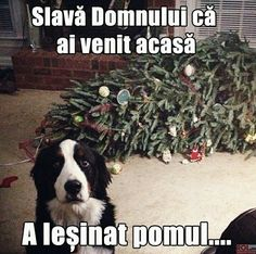 Dog Shaming Christmas Tree Fainted - Friday Frivolity - Holiday Cheer, One Way or Another - Christmas Memes + LINKY for all things Fun, Funny, Happy & Hopeful! Funny Animal Pictures, Funny Animals, Cute Animals, Animal Pics, Funny Animal Humor, Puppy Pictures, Dog Quotes, Animal Quotes, Humor Quotes