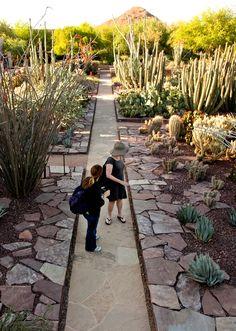 Possible step stones side of walkway Southern Landscaping, Garden Landscaping, Desert Botanical Garden, Botanical Gardens, Landscape Architecture, Landscape Design, Front Yard Garden Design, Arizona Gardening, Garden Pictures