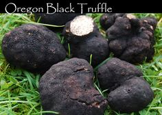 truffles in the wild | Ricks Wild Mushrooms » Black/White Oregon Truffles