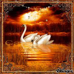 Autumn Swans!!! Bird Gif, Cement Crafts, Swan Song, Gif Pictures, Fantasy Art, Birds, Autumn, Cute, Bathroom
