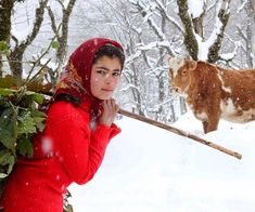 Iranian girl leading her flock on the heights of #Talesh in a beautiful snowy day in IRAN Iran Girls, Persian Architecture, Persian People, Persian Pattern, Iranian, Cultural Diversity, Cow, Wonderland, Middle