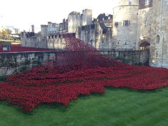 Wave from Blood Swept Lands and Seas of Red. Tower of London 2014. original concept and poppies by Ceramic Artist Paul Cummins, Installation Designed by Tom Piper