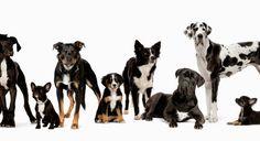 Hunde-Pfote.com  alles über Hunde google+