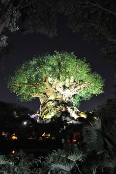 I'm going to live in that tree when I grow up!