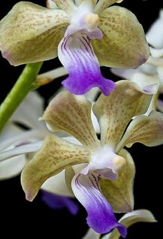 orquideas-3501 | Flickr - Photo Sharing!