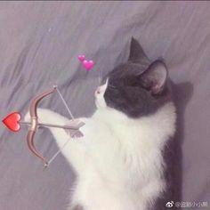 Cute Cat Memes, Cute Love Memes, Anime Best Friends, Cute Anime Pics, Cute Anime Couples, Cat Profile, Cute Couple Wallpaper, Cat Couple, Cat Icon