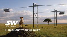 SkyWay: in harmony with wildlife
