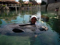 Dolphin Discovery Riviera Maya, hug a manatee today!