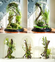 Enchanted forest terrarium domes - ve can find Terrarium and more on our website.Enchanted forest terrarium domes - ve Plantas Bonsai, Terrarium Plants, Glass Terrarium Ideas, Succulent Terrarium Diy, Terranium Ideas, Orchid Terrarium, Fairy Terrarium, Terrarium Wedding, Moss Terrarium