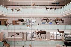 renzo piano MUSE museo dello scienze trento designboom