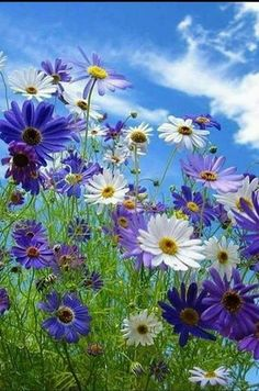Take a look at these amazing Nature photos and videos 💕 💋 Amazing Flowers, Purple Flowers, Beautiful Flowers, Meadow Flowers, Wild Flowers, Flower Pictures, Nature Pictures, Beautiful Gardens, Planting Flowers