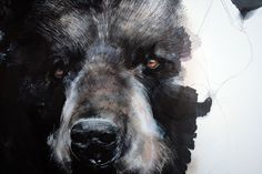 Douglas Miller  Bear sketch