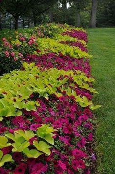 Flower bed border ideas - alyssum, begonia and ornamental ...